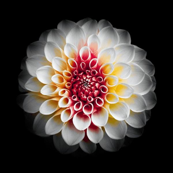 flowers-101.jpg