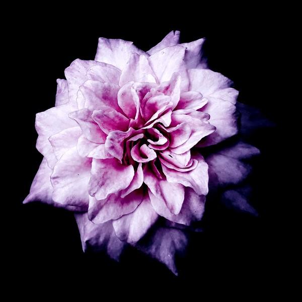 flowers-105.jpg