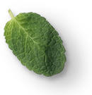 mint-leaves-1a.png